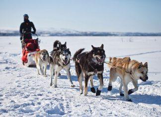 Witaminy w trosce o zdrowe stawy psów