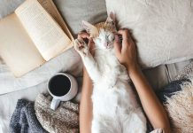 Jak oduczyć kota spania w łóżku?