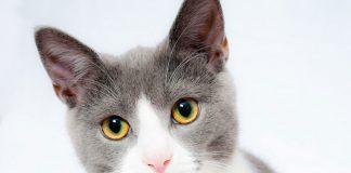 Fitmin karma dla kota